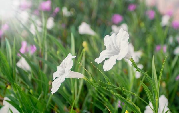 朝の美しい新鮮な白い花