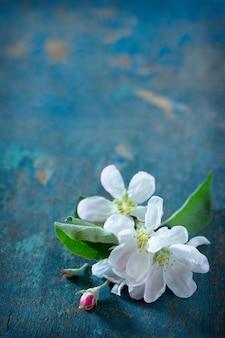 リンゴの木の美しい新鮮な白い花