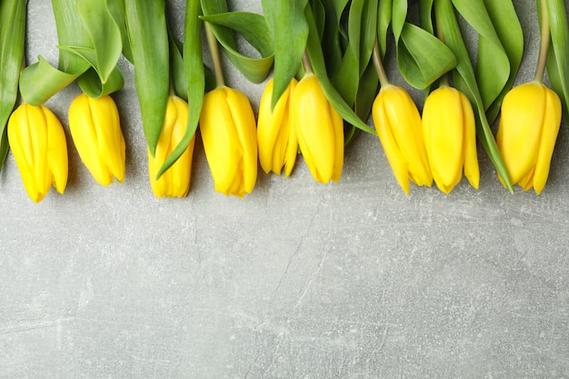 Beautiful fresh yellow tulips on gray. space for text