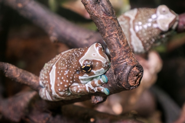 Beautiful frog. exotic toad