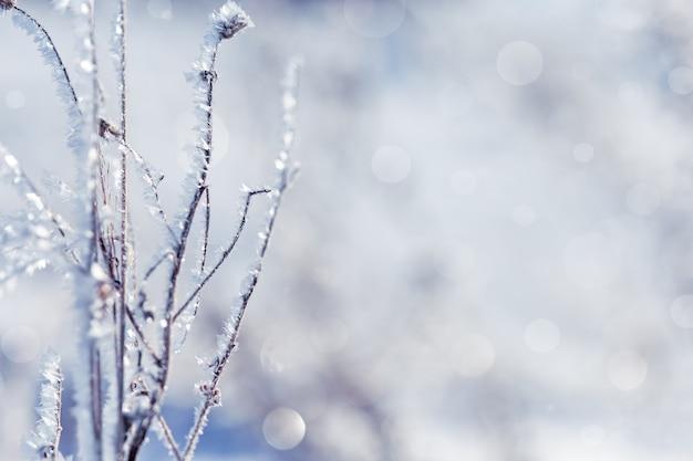 雪の降る冬の風景に長い影の日差しと冬の太陽の美しい凍った草