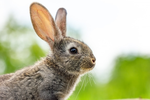 Beautiful funny grey rabbit on a natural green