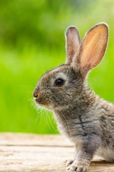 美しい面白い灰色のウサギ