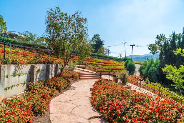 Красивый сад на королевской сельскохозяйственной станции - дои интханон в чиангмае, таиланд