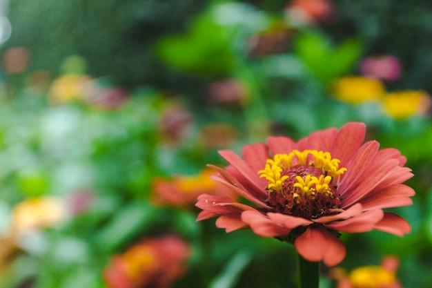 バックグラウンドでぼやけている多くの異なる花を持つ美しい庭の花