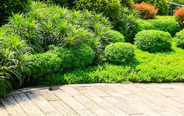 Beautiful garden and plant in summer season
