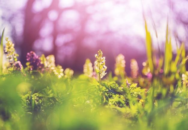 美しい庭の春の花