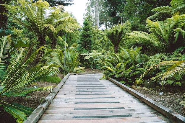 Beautiful garden with palms and ferns