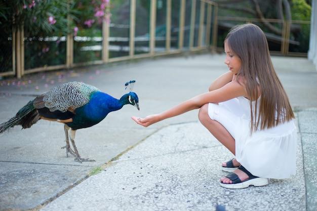 Красивая девочка кормит павлина в парке, милый ребенок.