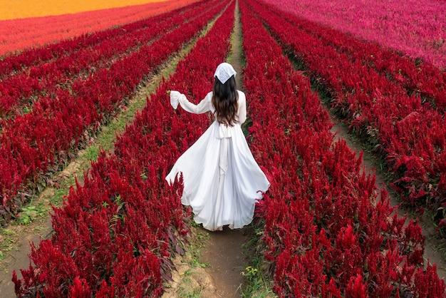 白いドレスを着た美しい少女がチェンマイのケイトウの花畑を旅する