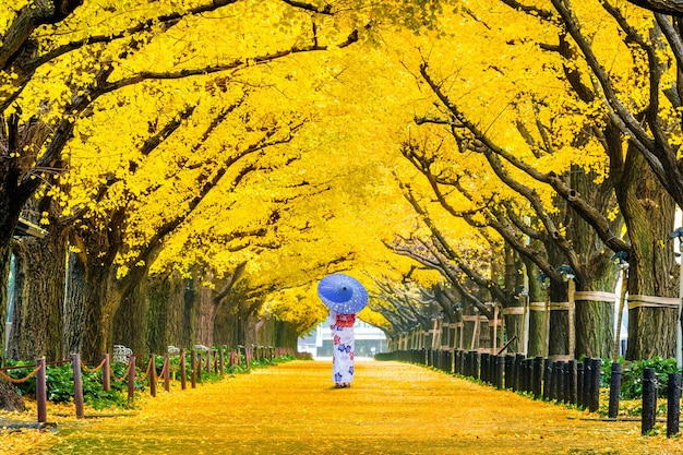 Beautiful girl wearing japanese traditional kimono at row of yellow ginkgo tree in autumn. autumn park in tokyo, japan.