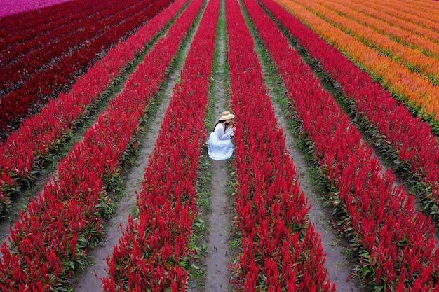 La bella ragazza in vestito bianco viaggia ai campi di fiori di celosia, chiang mai