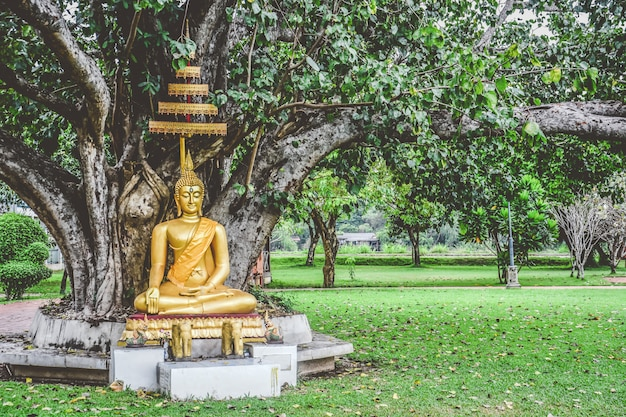 Beautiful gold color buddha statue sitting under bodhi tree, peaceful, meditation or enlightenment concept