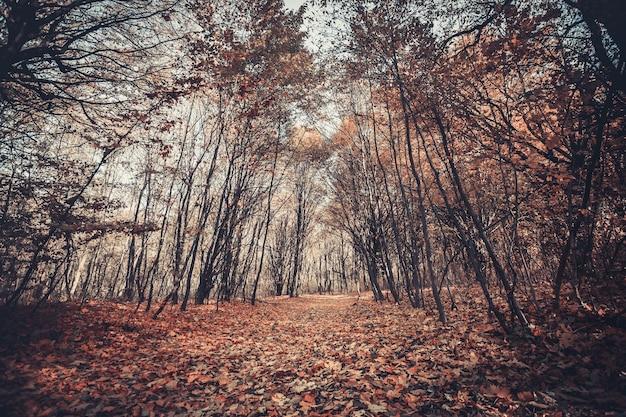 森の中の美しい黄金の秋