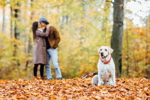 秋の森でポーズをとる美しいゴールデンレトリバー。