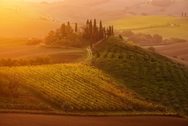 Красивый золотой восход солнца в тоскане, италия с виноградником. природный idillyc сезонный осенний фон