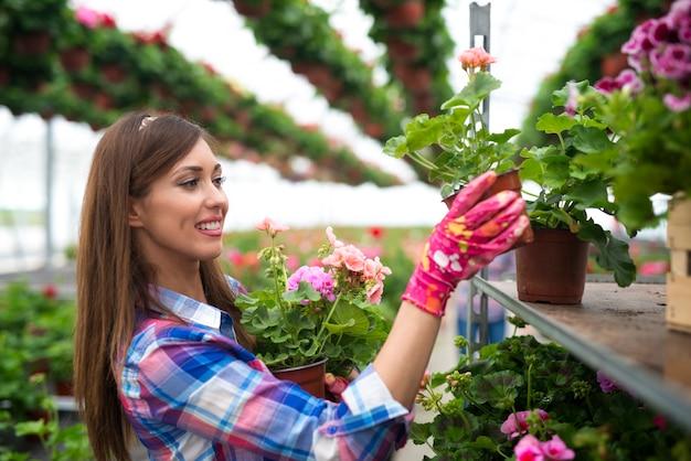 Красивая великолепная женщина-флорист кладет цветы в горшках на полку