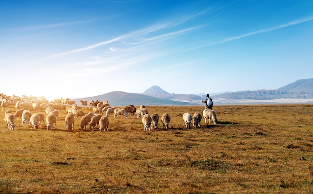 Beautiful grassland and flock