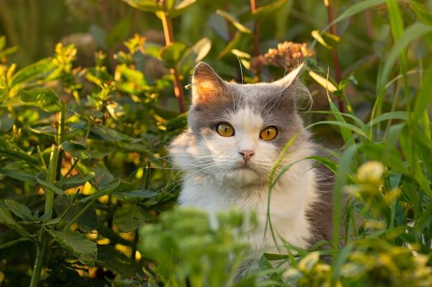 美しい灰色と白猫の肖像画