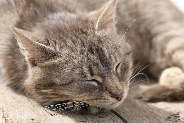 아름다운 회색 고양이 애완 동물 자