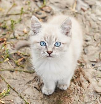 파란 눈을 가진 아름 다운 회색 고양이입니다. 애완 동물. 동물 보호소. 버려진 고양이. 비 후 거리에 길 잃은 슬픈 고양이. 노숙자 동물 보호의 개념.