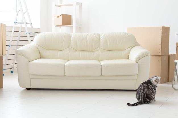 新しいアパートに移動している間、美しい灰色のスコティッシュフォールド猫が新しい空のソファの近くに座っています。新築祝いと猫との良い伝統の概念。