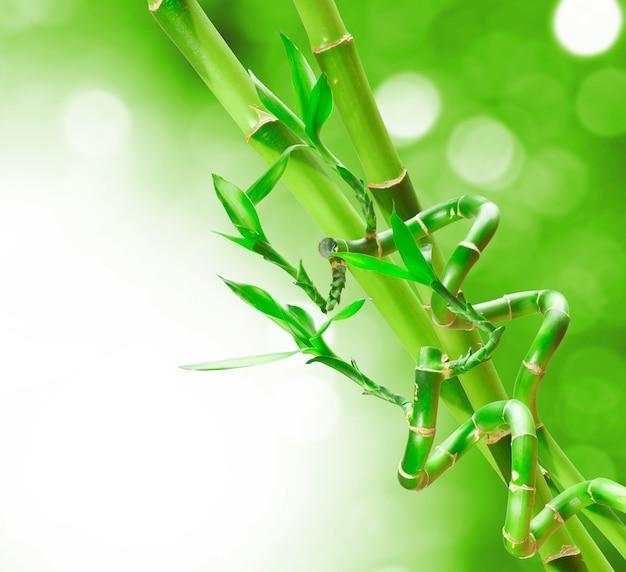 Красивая зеленая бамбуковая граница для вашего дизайна