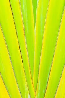 Beautiful green banana leaf textures for background
