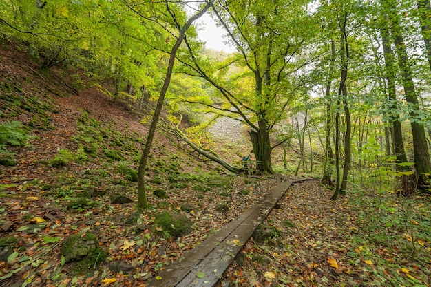 Beautiful green beech forest in southern sweden. with lush green trees and the forest floor filled with orange and red colored leaves
