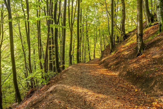 Beautiful green beech forest in southern sweden