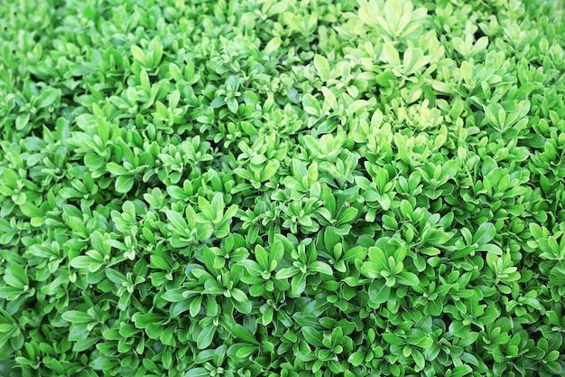 Красивый зеленый куст крупным планом