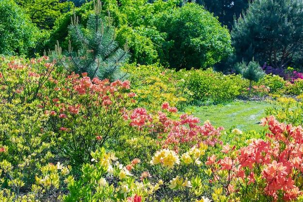 Красивый зеленый красочный ботанический сад с декоративной клумбой, деревьями, кустами. живописный летний садоводство фон природа. концепция ландшафтного дизайна.