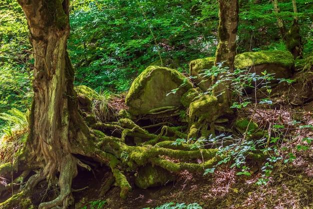 Красивый зеленый лиственный лесной пейзаж