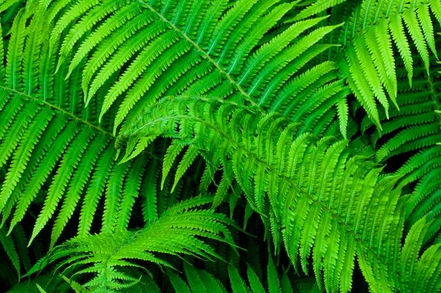 Красивый зеленый папоротник оставляет естественный фон