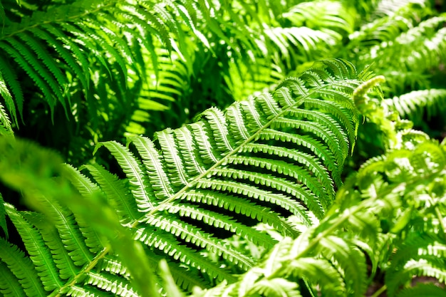 Beautiful green fern leaves natural surface