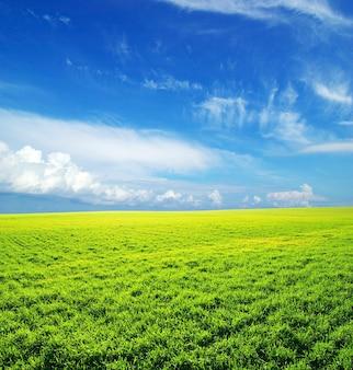 美しい緑の野原の風景と雲と青い空