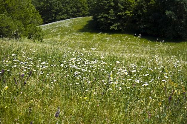 Красивое зеленое поле с множеством разноцветных полевых цветов