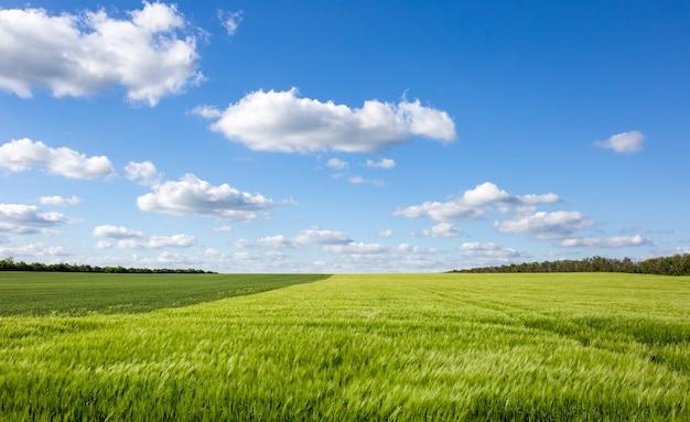 대조되는 구름 풍경이 있는 아름다운 녹색 들판