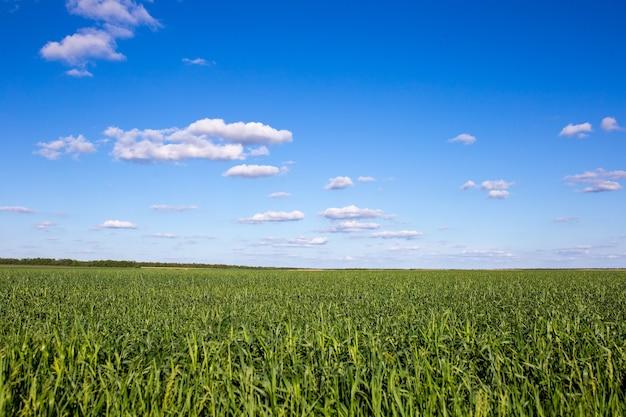 Красивое зеленое поле с контрастным пейзажем облаков