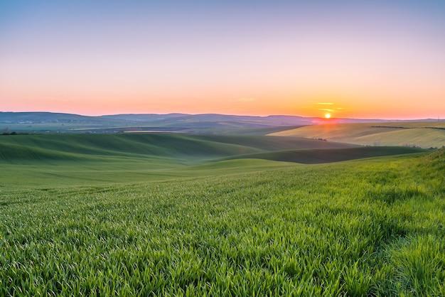 Красивые зеленые поля на закате, весенний сельскохозяйственный пейзаж