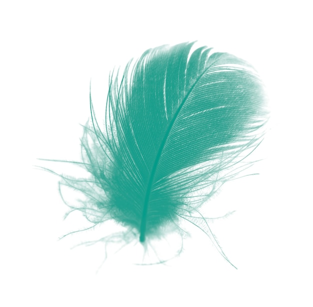 Beautiful green florida keys colors tone feather texture background