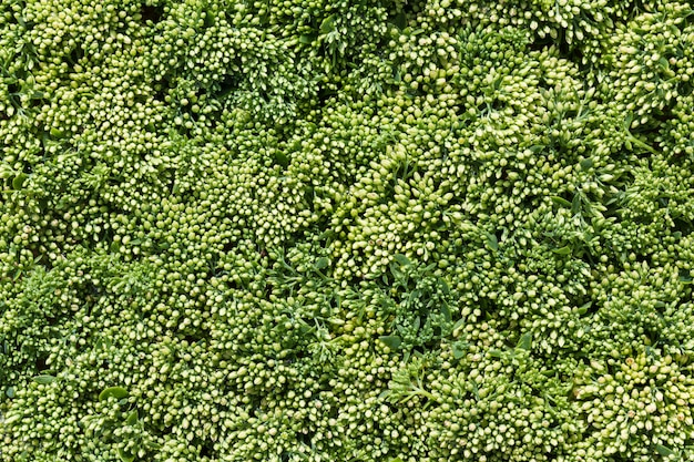 Beautiful green flowers background in top view