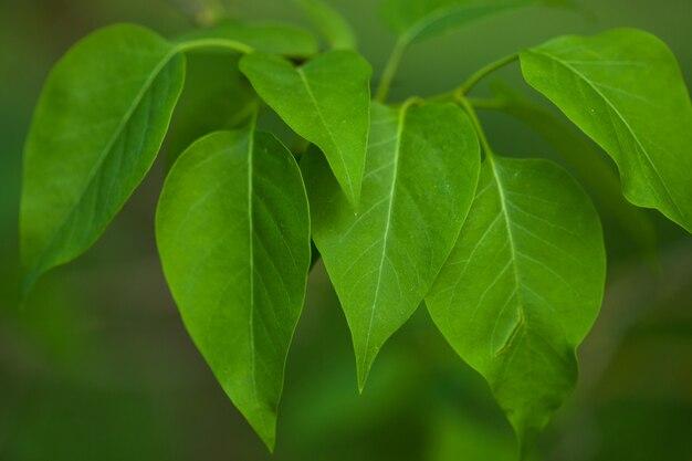 아름 다운 녹색 꽃 배경