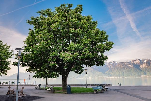 Красивая зеленая листва весной сезонная против голубого озера.