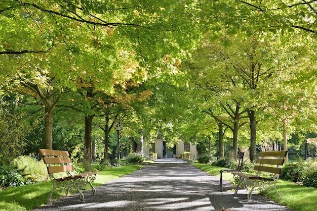 Красивая зеленая листва деревьев окаймляет аллею в общественном парке с двумя пустыми скамейками