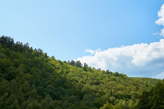 Beautiful green forest against the blue sky with clouds. natural park.
