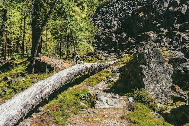 日差しの中で山の野生植物の間の歩道に木の幹がある美しい緑の森の風景。日光の下でモレーンの丘の近くの岩の間で野生植物と山の森のカラフルな日当たりの良い風景