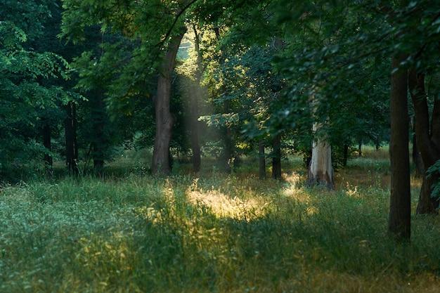 美しい緑の森の木。