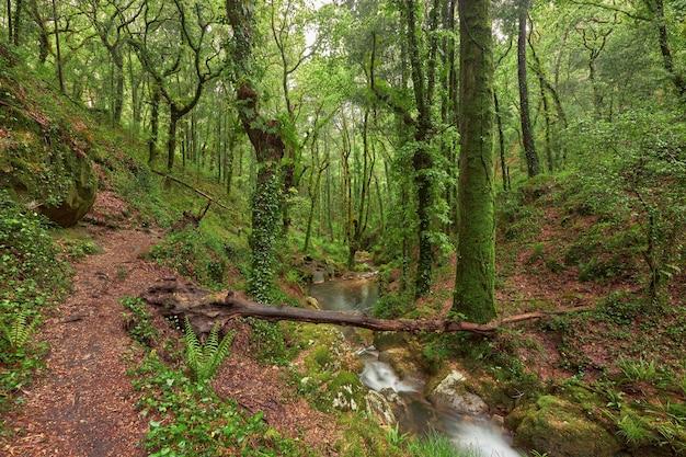 스페인 갈리시아 지역에 강이 있는 아름다운 녹색 숲.