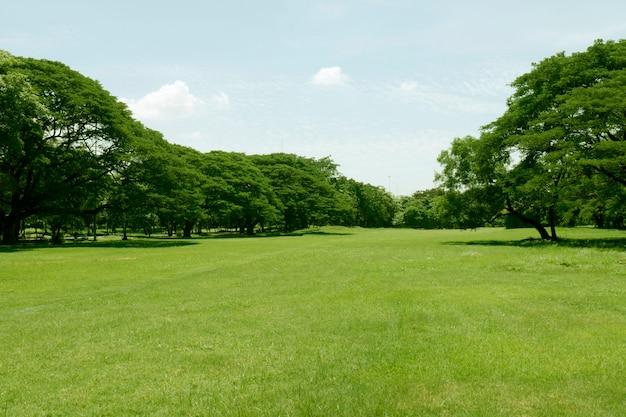 공원에서 아름 다운 푸른 잔디